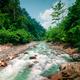Wild, vivid vegetation of tropical forest. North Sumatra, Indonesia - PhotoDune Item for Sale