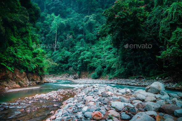 Mysterious jungle landscape with fast stream. Sumatra, Indonesia. - Stock Photo - Images