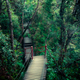 Mysterious landscape of foggy forest with wooden bridge - PhotoDune Item for Sale