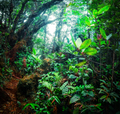 Mystical tropical mossy forest with amazing jungle plants - PhotoDune Item for Sale