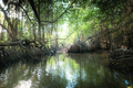 Surreal beauty of jungle landscape with tropical river and mangrove rain forest  - PhotoDune Item for Sale