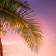 Sunset at tropics with palm trees against amazing colorful sky - PhotoDune Item for Sale