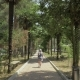 Young Girl Walking Along the Palm Alley. Batumi Botanical Garden, Georgia - VideoHive Item for Sale