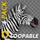 Zebra - Gallop Loop - Pack of 4 - VideoHive Item for Sale