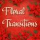 Floral Transitions (Red Poinsettia) - VideoHive Item for Sale