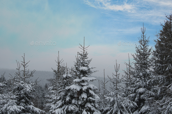 Snowy landscape with tree tops - Stock Photo - Images