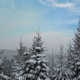 Snowy landscape with tree tops - PhotoDune Item for Sale