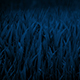Corn Plants In The Wind At Night - VideoHive Item for Sale
