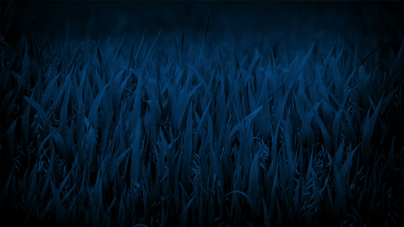 Corn Plants In The Wind At Night By Rockfordmedia Videohive