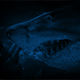 Huge Shark Swims Past At Night - VideoHive Item for Sale