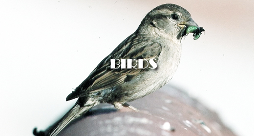 BIRDS FOOTAGE COLLECTION