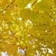 Yellow Foliage on Trees - VideoHive Item for Sale