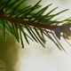 Pine Branch with Water Droplets - VideoHive Item for Sale