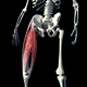 3D Abductor Muscles - VideoHive Item for Sale