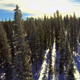 Flight Over Snow Covered Pines - VideoHive Item for Sale