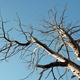 dead wood - PhotoDune Item for Sale