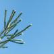 pine needles - PhotoDune Item for Sale