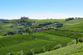 Green vineyards in a sunny day in the Italian country, blue sky - PhotoDune Item for Sale