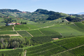 Green vineyards and hills in a sunny day in Italy - PhotoDune Item for Sale