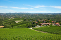 Green vineyards, Piedmont landscape in a sunny day, blue sky - PhotoDune Item for Sale