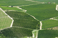 Vineyards aerial view in a sunny day in Piedmont, Italy - PhotoDune Item for Sale