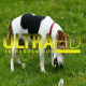 Dog Plays on a Green Meadow - VideoHive Item for Sale