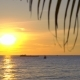 Sunset on a Tropical Beach Through the Branches of a Palm Tree - VideoHive Item for Sale