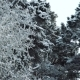 Trees in the Winter Forest Landscape - VideoHive Item for Sale