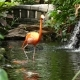 Flamingo Wading Tropical Garden - VideoHive Item for Sale