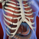 Heart & Stomach Anatomy in Motion - VideoHive Item for Sale