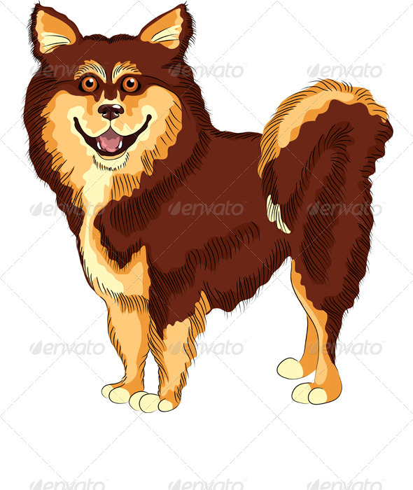 Vector Dog Lapphund Breed Smiles  - Animals Characters