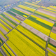 rapeseed flower field with village in spring - PhotoDune Item for Sale