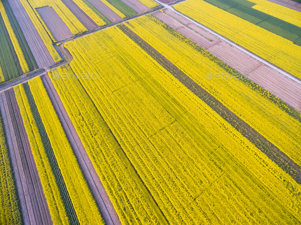 bird's eye view of the spring fields - Stock Photo - Images