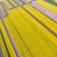 bird's eye view of the spring fields - PhotoDune Item for Sale