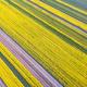 aerial view of rapeseed flower field - PhotoDune Item for Sale