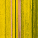 yellow rapeseed flower field in spring - PhotoDune Item for Sale