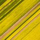 aerial view of rapeseed flower field in spring - PhotoDune Item for Sale
