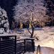 Winter evening in snowy garden - PhotoDune Item for Sale