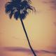 Golden Sunset Palm Tree - PhotoDune Item for Sale