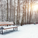 Park bench and trees covered by heavy snow - PhotoDune Item for Sale