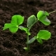 Growing Plants  Sprouts Germination - VideoHive Item for Sale