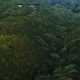Flight Over Forest in Mountains - VideoHive Item for Sale
