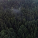 Flying Above Green Forest at Summer Time - VideoHive Item for Sale