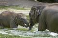 Elephants bathing - PhotoDune Item for Sale