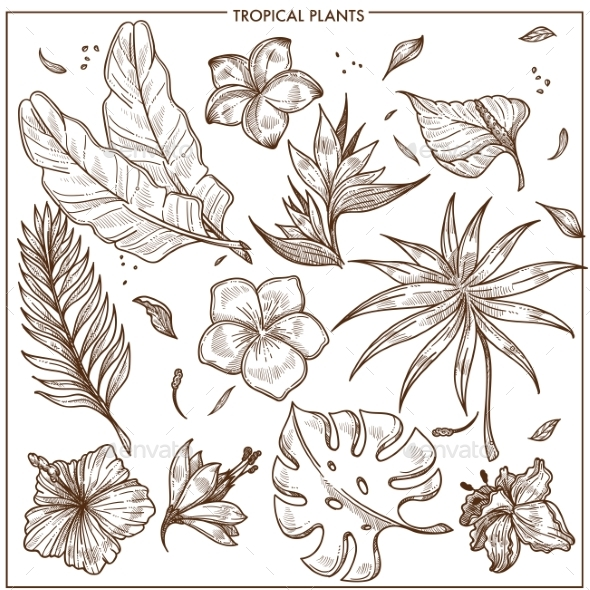 Tropical Plants and Exotic Flowers Sketch Vector - Flowers & Plants Nature