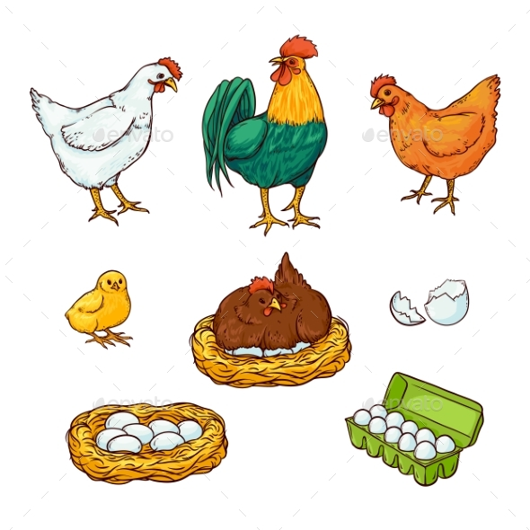 Vector Farm Chicken Set - Food Objects