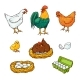 Vector Farm Chicken Set
