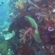 Coral Reef and Tropical Fish. Bali,Indonesia - VideoHive Item for Sale