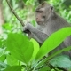 Monkeys in the Forest in Bali - VideoHive Item for Sale