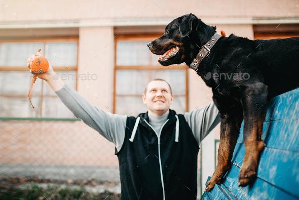 Cynologist training service dog on playground - Stock Photo - Images